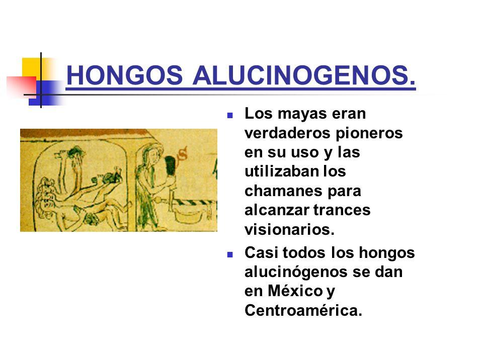 HONGOS ALUCINOGENOS. Los mayas eran verdaderos pioneros en su uso y las utilizaban los chamanes para alcanzar trances visionarios.