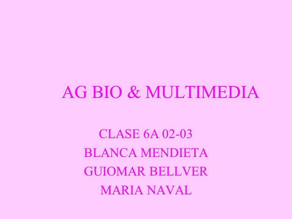 CLASE 6A 02-03 BLANCA MENDIETA GUIOMAR BELLVER MARIA NAVAL