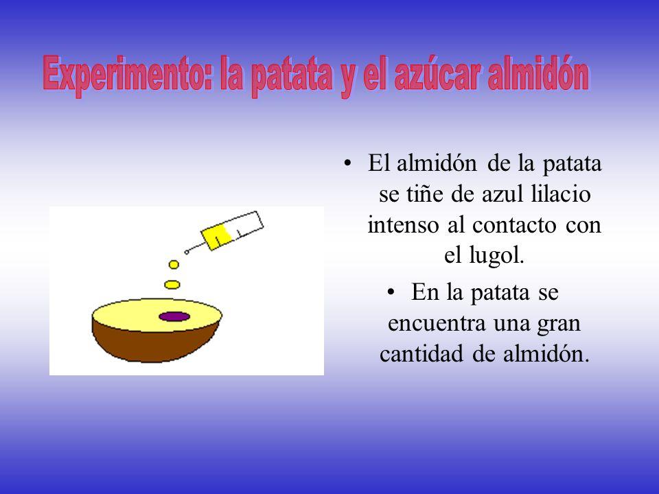 Experimento: la patata y el azúcar almidón