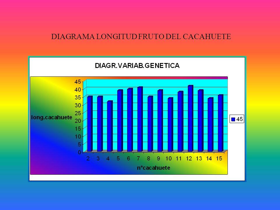 DIAGRAMA LONGITUD FRUTO DEL CACAHUETE