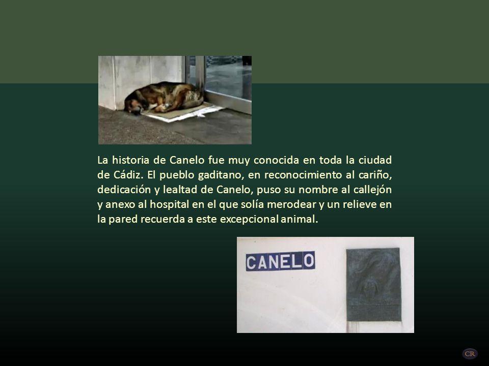 La historia de Canelo fue muy conocida en toda la ciudad de Cádiz