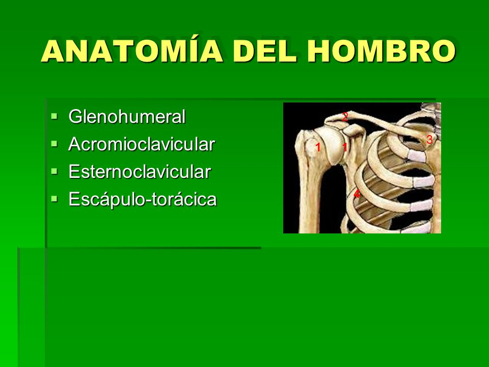 ANATOMÍA DEL HOMBRO Glenohumeral Acromioclavicular Esternoclavicular