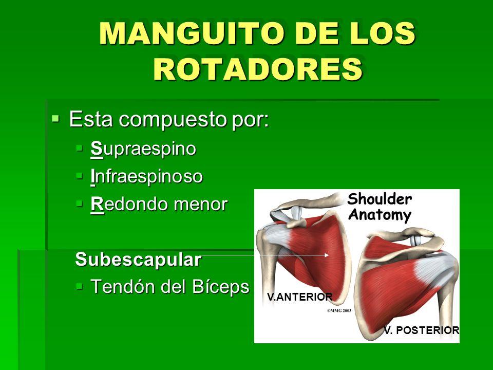 MANGUITO DE LOS ROTADORES