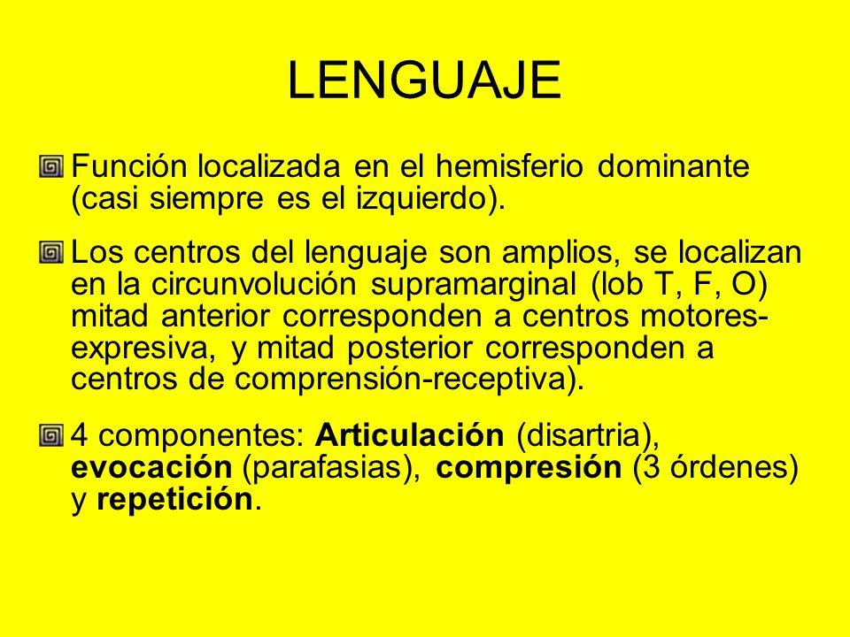 LENGUAJE Función localizada en el hemisferio dominante (casi siempre es el izquierdo).