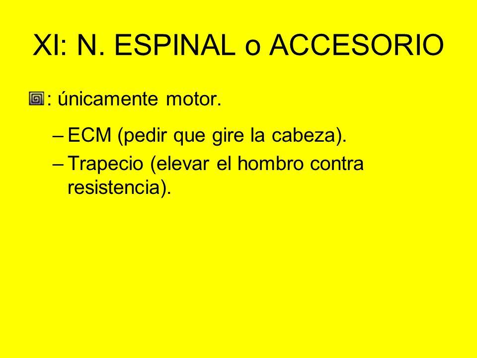 XI: N. ESPINAL o ACCESORIO