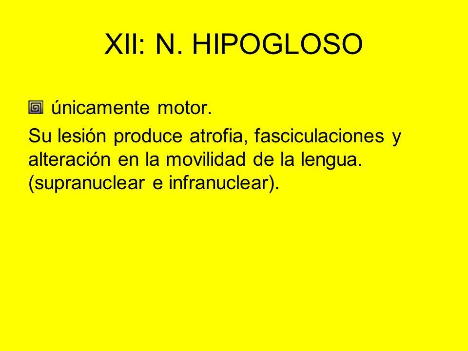 XII: N. HIPOGLOSO únicamente motor.