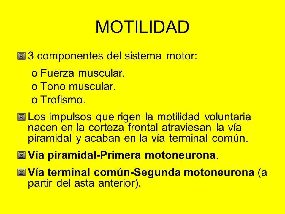 MOTILIDAD 3 componentes del sistema motor: Fuerza muscular.