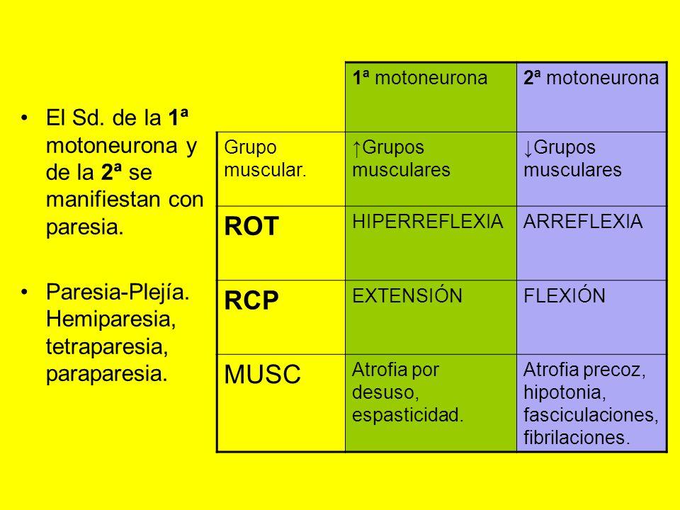 1ª motoneurona2ª motoneurona. Grupo muscular. ↑Grupos musculares. ↓Grupos musculares. ROT. HIPERREFLEXIA.