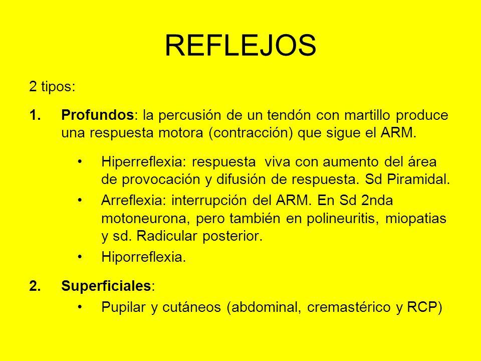 REFLEJOS 2 tipos: Profundos: la percusión de un tendón con martillo produce una respuesta motora (contracción) que sigue el ARM.