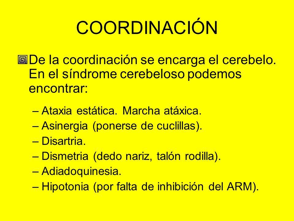 COORDINACIÓN De la coordinación se encarga el cerebelo. En el síndrome cerebeloso podemos encontrar: