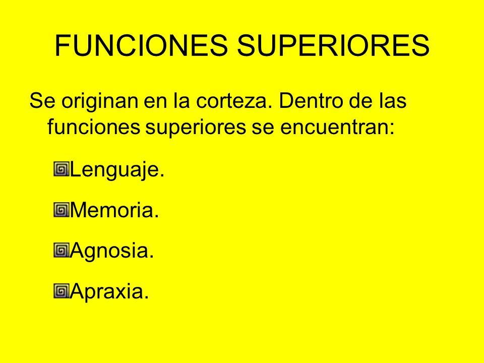 FUNCIONES SUPERIORES Se originan en la corteza. Dentro de las funciones superiores se encuentran: Lenguaje.