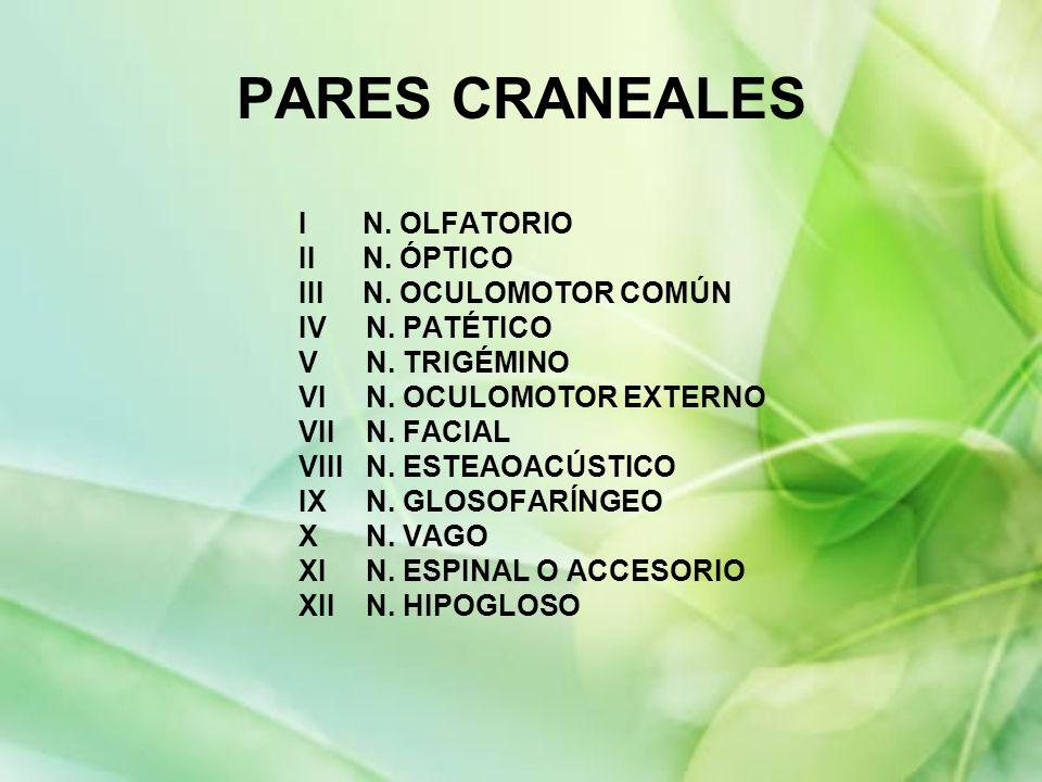 PARES CRANEALES I N. OLFATORIO II N. ÓPTICO III N. OCULOMOTOR COMÚN
