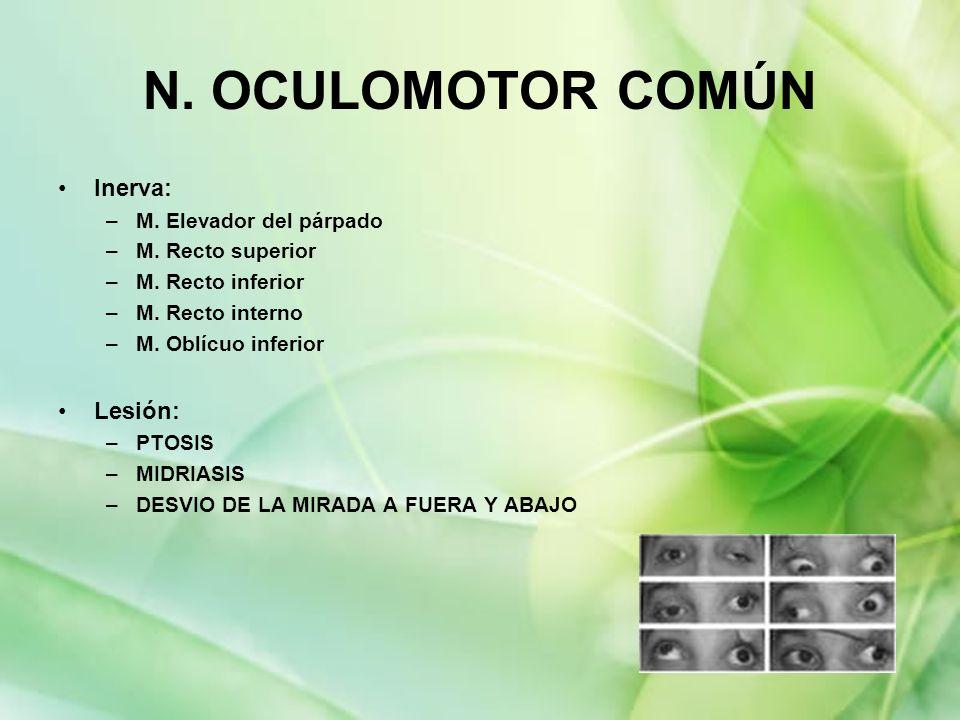 N. OCULOMOTOR COMÚN Inerva: Lesión: M. Elevador del párpado