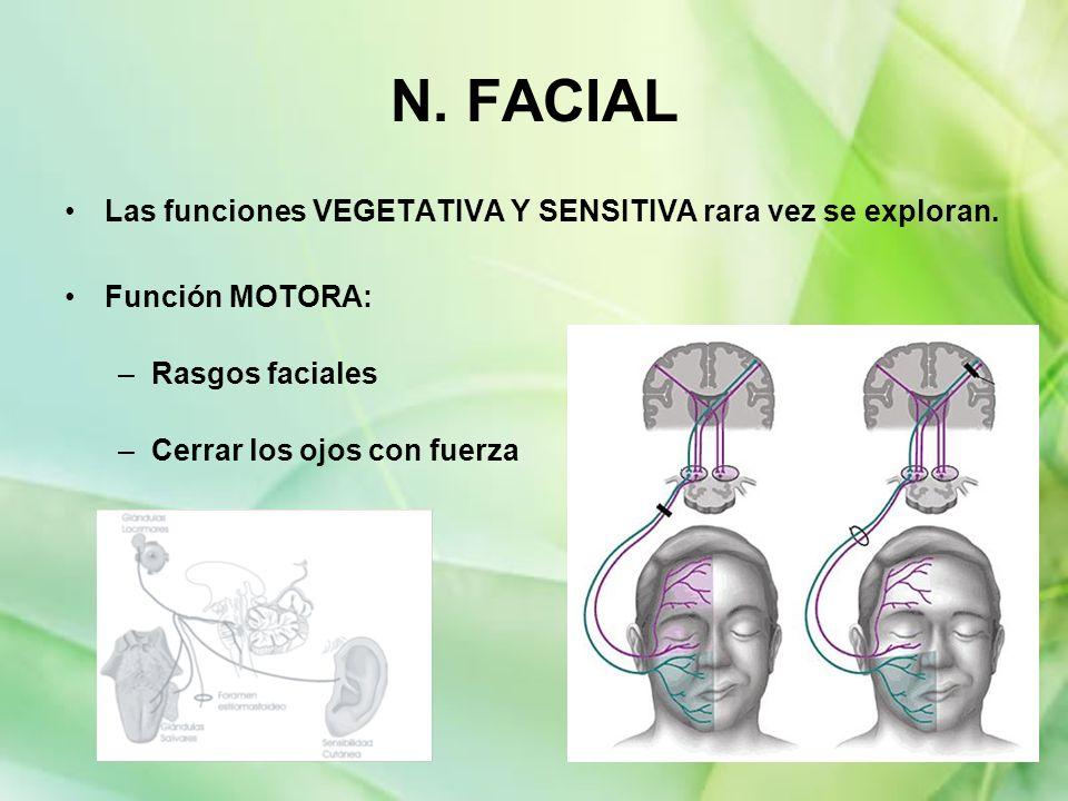 N. FACIAL Las funciones VEGETATIVA Y SENSITIVA rara vez se exploran.