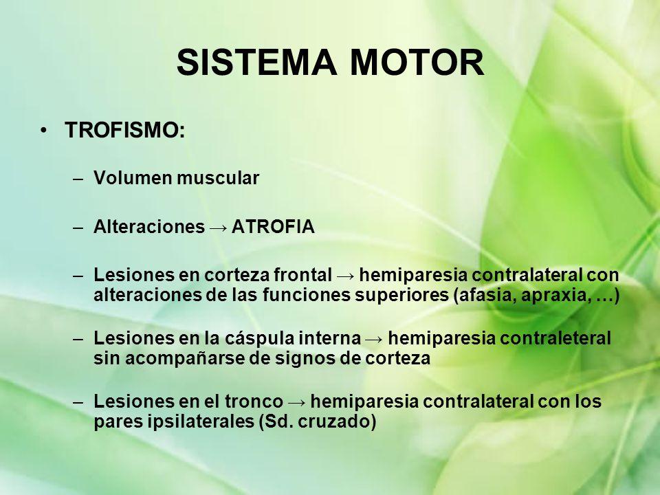 SISTEMA MOTOR TROFISMO: Volumen muscular Alteraciones → ATROFIA