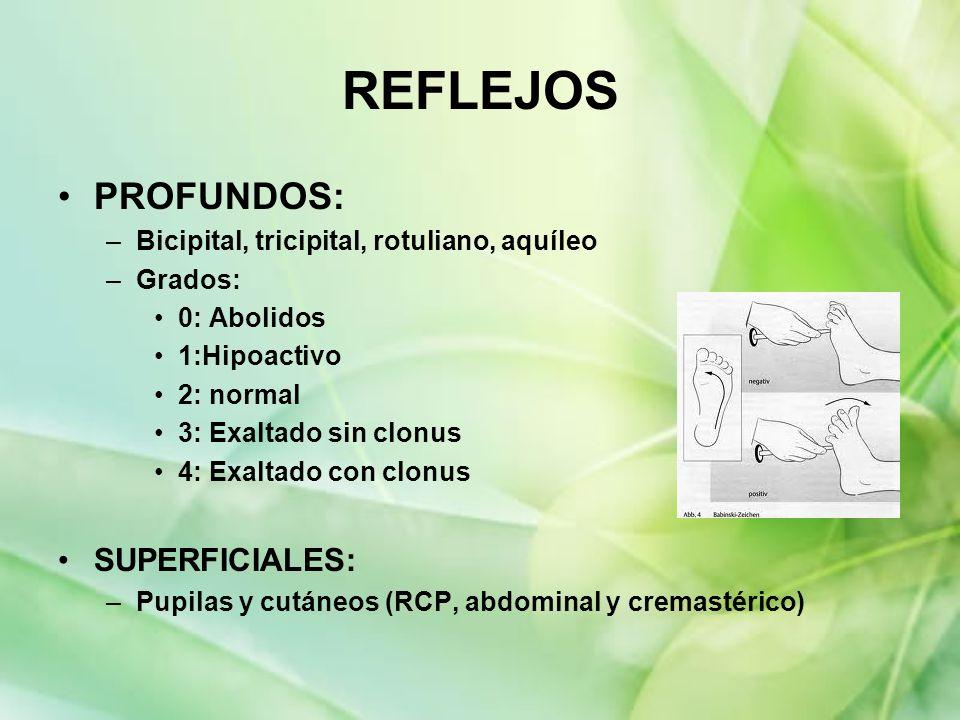 REFLEJOS PROFUNDOS: SUPERFICIALES: