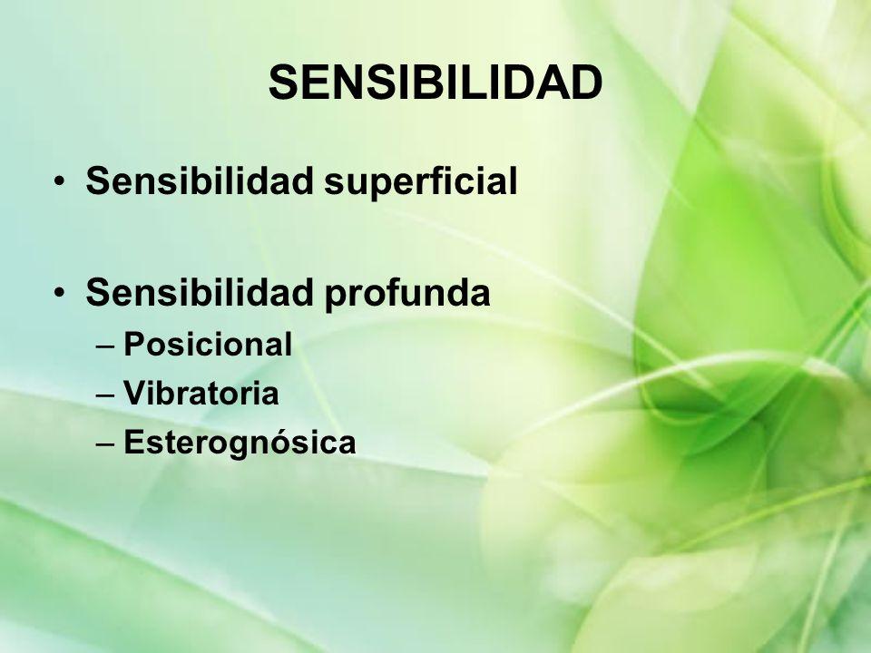 SENSIBILIDAD Sensibilidad superficial Sensibilidad profunda Posicional
