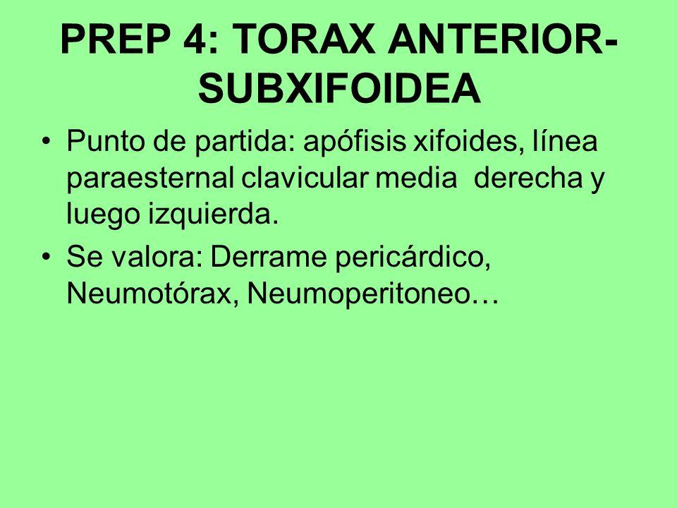 PREP 4: TORAX ANTERIOR- SUBXIFOIDEA