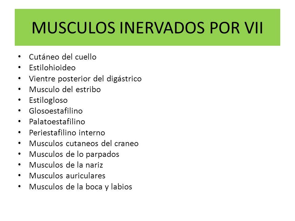 MUSCULOS INERVADOS POR VII