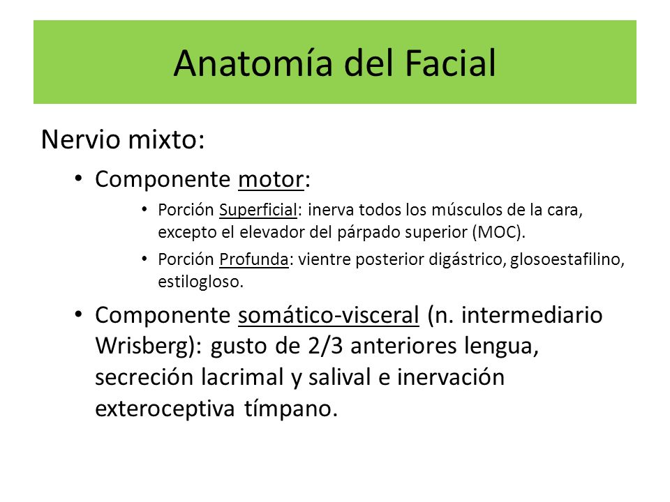 Anatomía del Facial Nervio mixto: Componente motor: