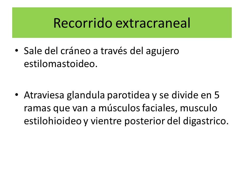 Recorrido extracraneal