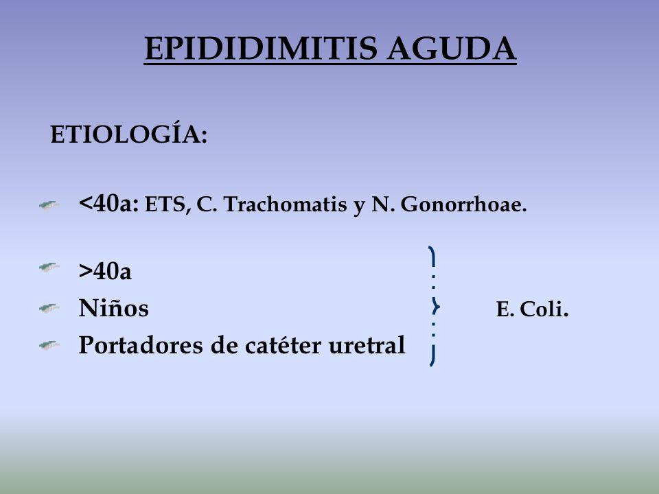 EPIDIDIMITIS AGUDA ETIOLOGÍA: Niños E. Coli.