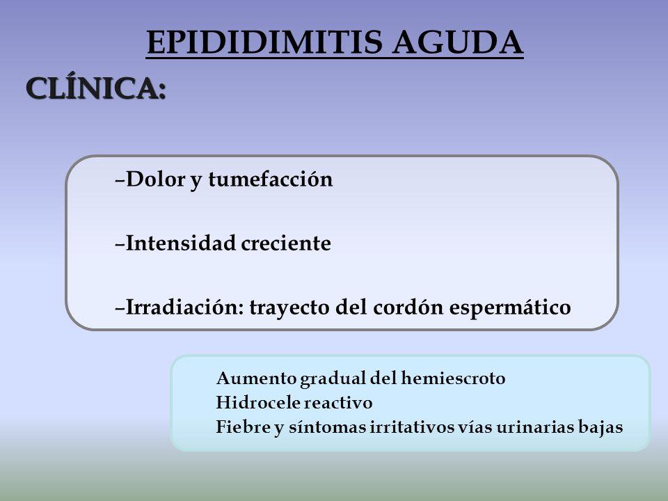 EPIDIDIMITIS AGUDA CLÍNICA: Dolor y tumefacción Intensidad creciente