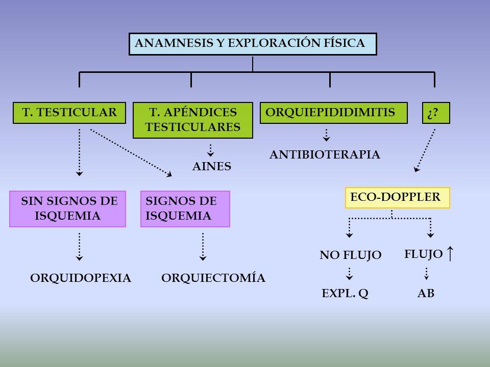 T. APÉNDICES TESTICULARES