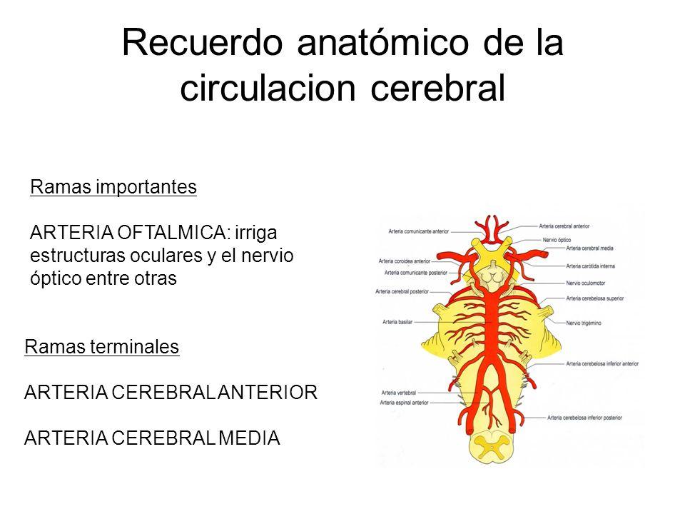 Recuerdo anatómico de la circulacion cerebral