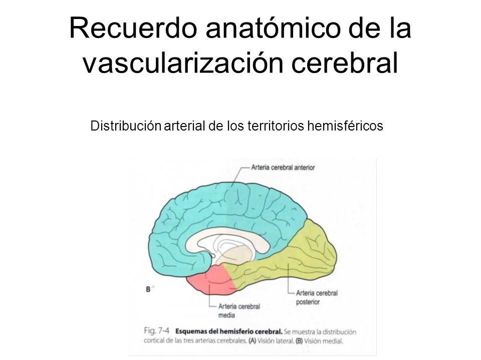 Recuerdo anatómico de la vascularización cerebral