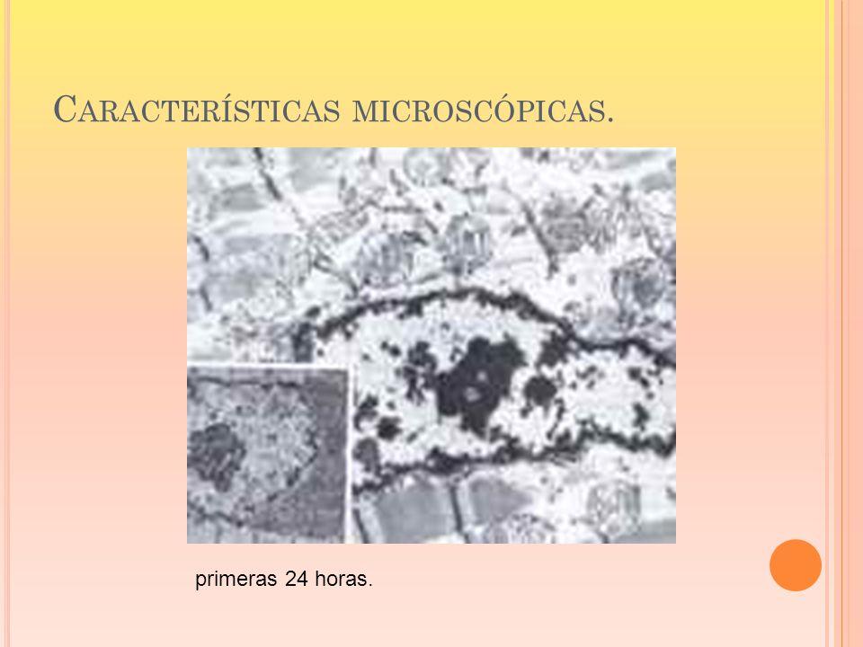 Características microscópicas.