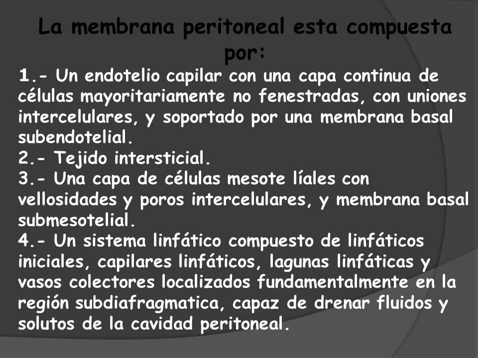La membrana peritoneal esta compuesta por: