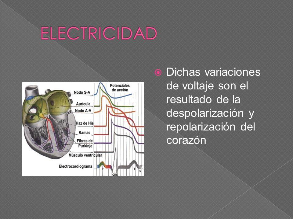 ELECTRICIDAD Dichas variaciones de voltaje son el resultado de la despolarización y repolarización del corazón.