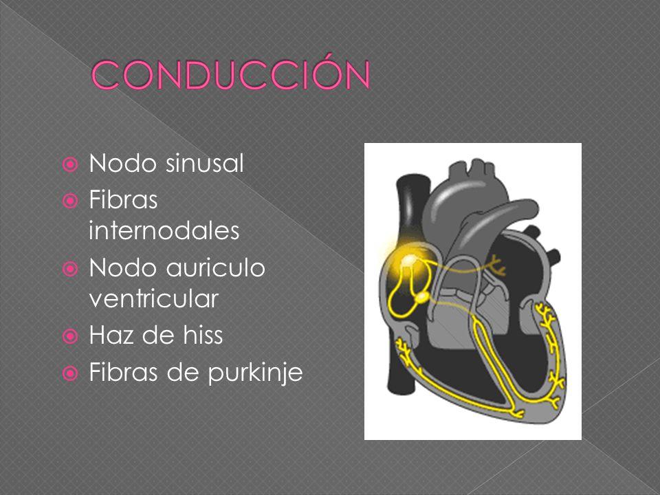 CONDUCCIÓN Nodo sinusal Fibras internodales Nodo auriculo ventricular
