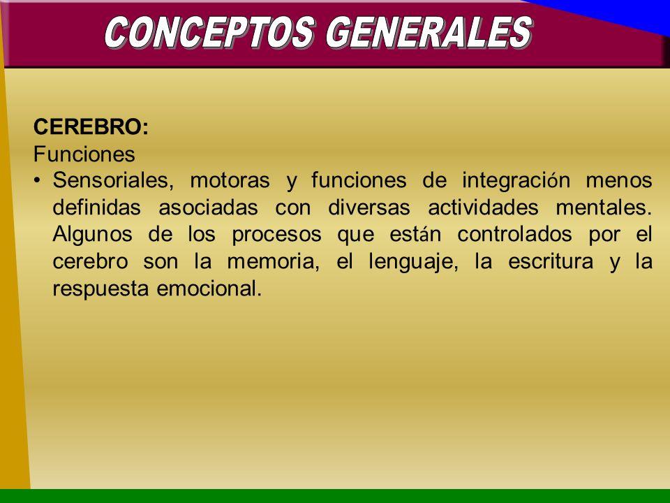 CONCEPTOS GENERALES CEREBRO: Funciones.