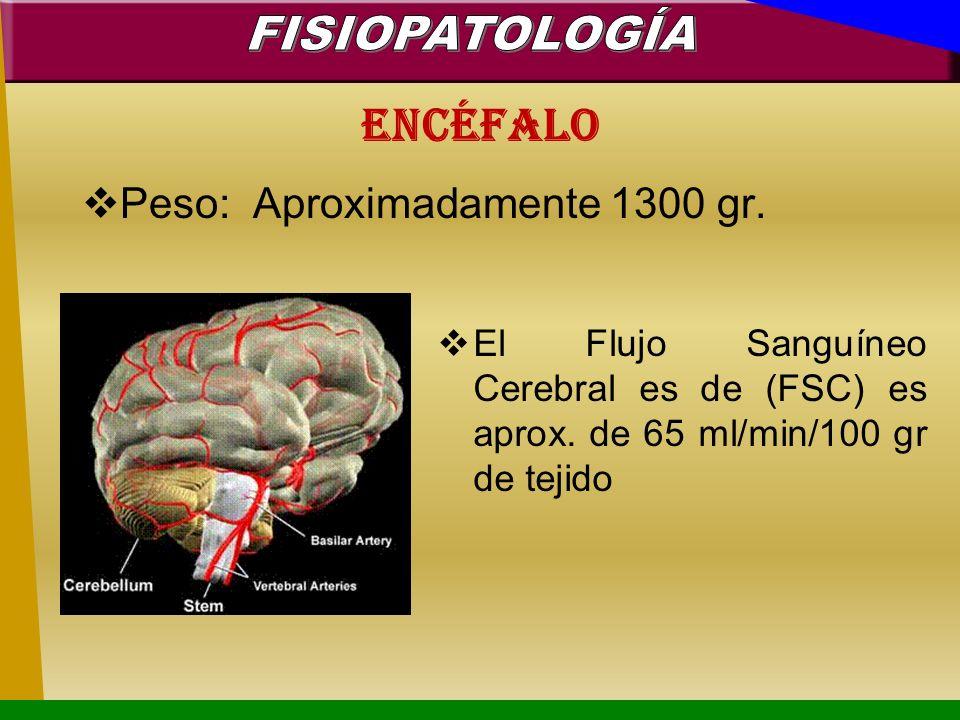 FISIOPATOLOGÍA Encéfalo Peso: Aproximadamente 1300 gr.