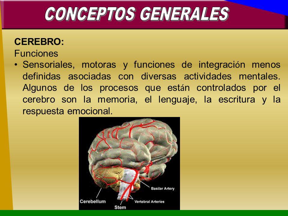 CONCEPTOS GENERALESCEREBRO: Funciones.
