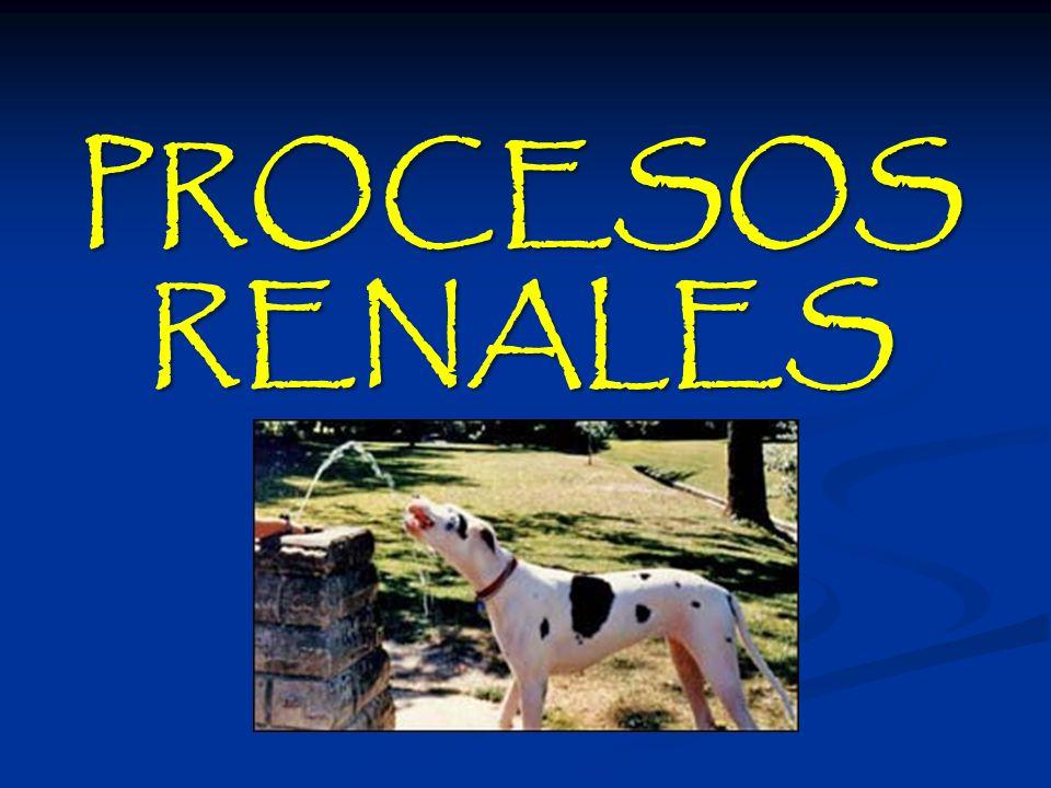 PROCESOS RENALES