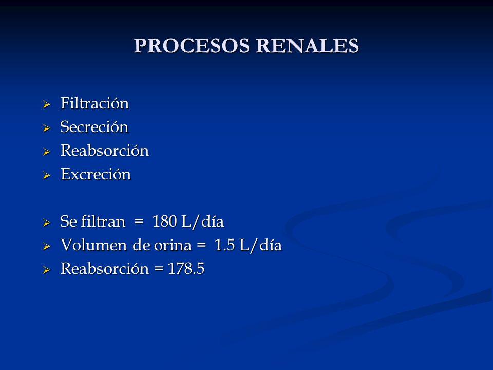 PROCESOS RENALES Filtración Secreción Reabsorción Excreción