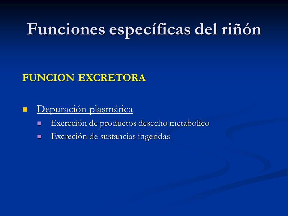Funciones específicas del riñón