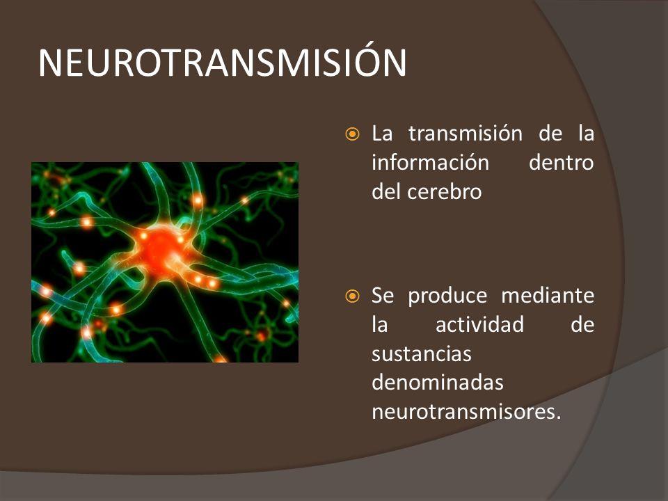 NEUROTRANSMISIÓN La transmisión de la información dentro del cerebro