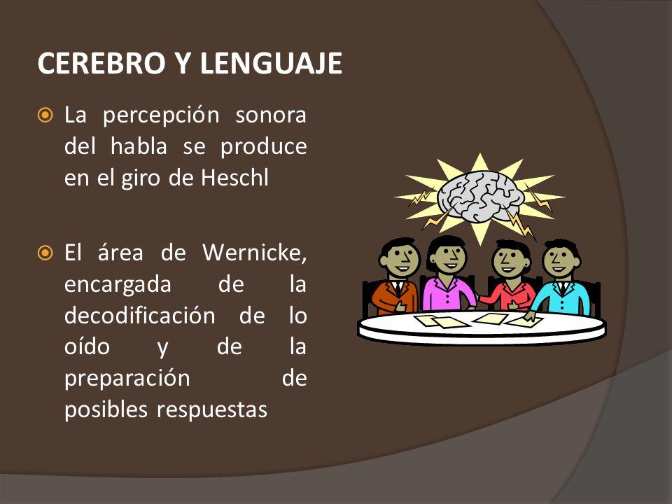 CEREBRO Y LENGUAJE La percepción sonora del habla se produce en el giro de Heschl.