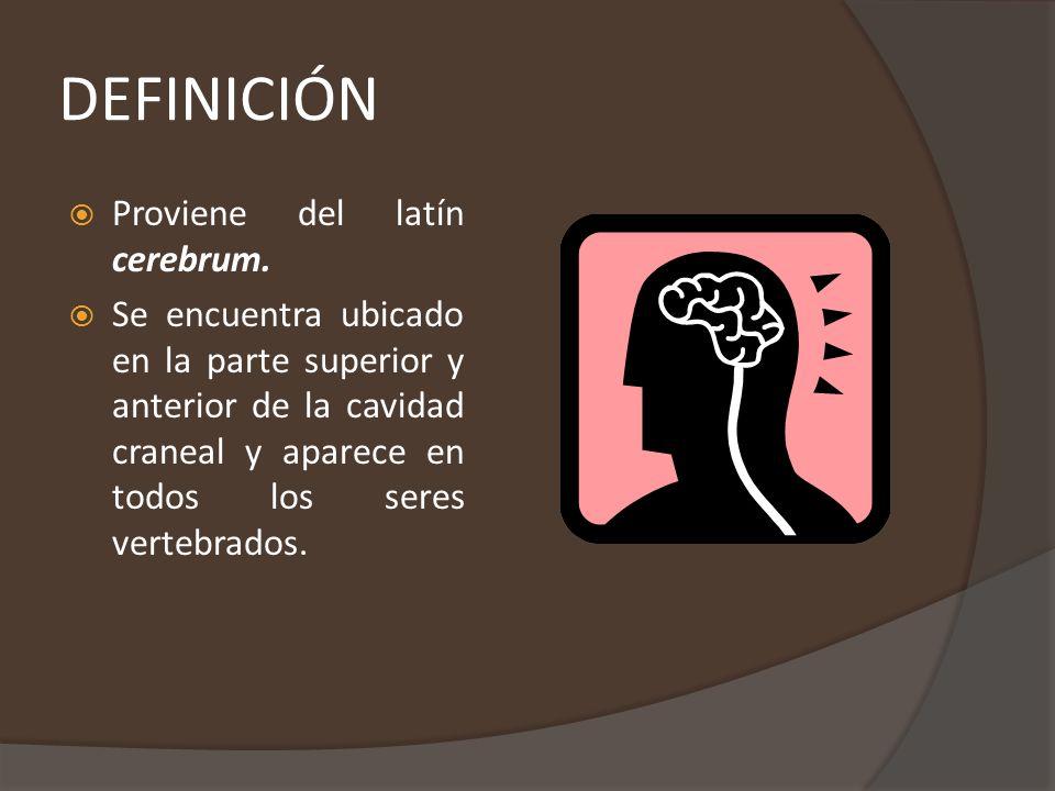 DEFINICIÓN Proviene del latín cerebrum.
