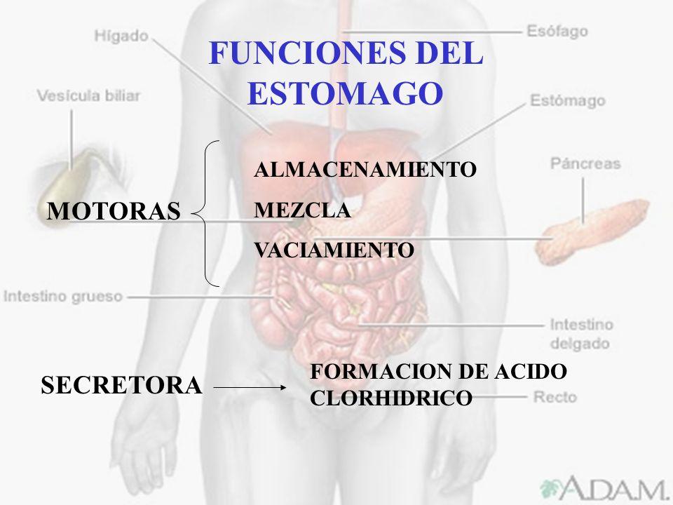 FUNCIONES DEL ESTOMAGO