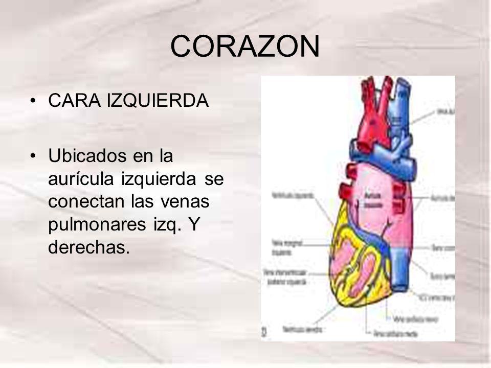 CORAZON CARA IZQUIERDA