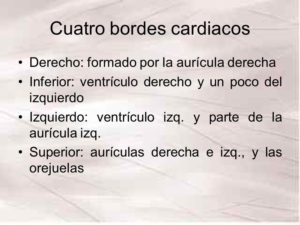 Cuatro bordes cardiacos