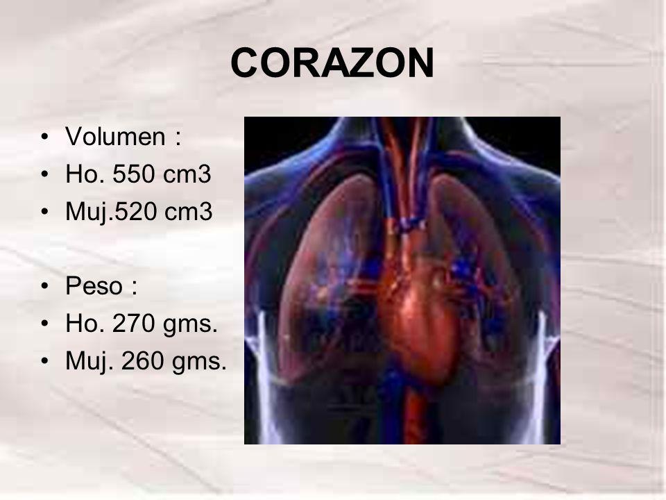 CORAZON Volumen : Ho. 550 cm3 Muj.520 cm3 Peso : Ho. 270 gms.