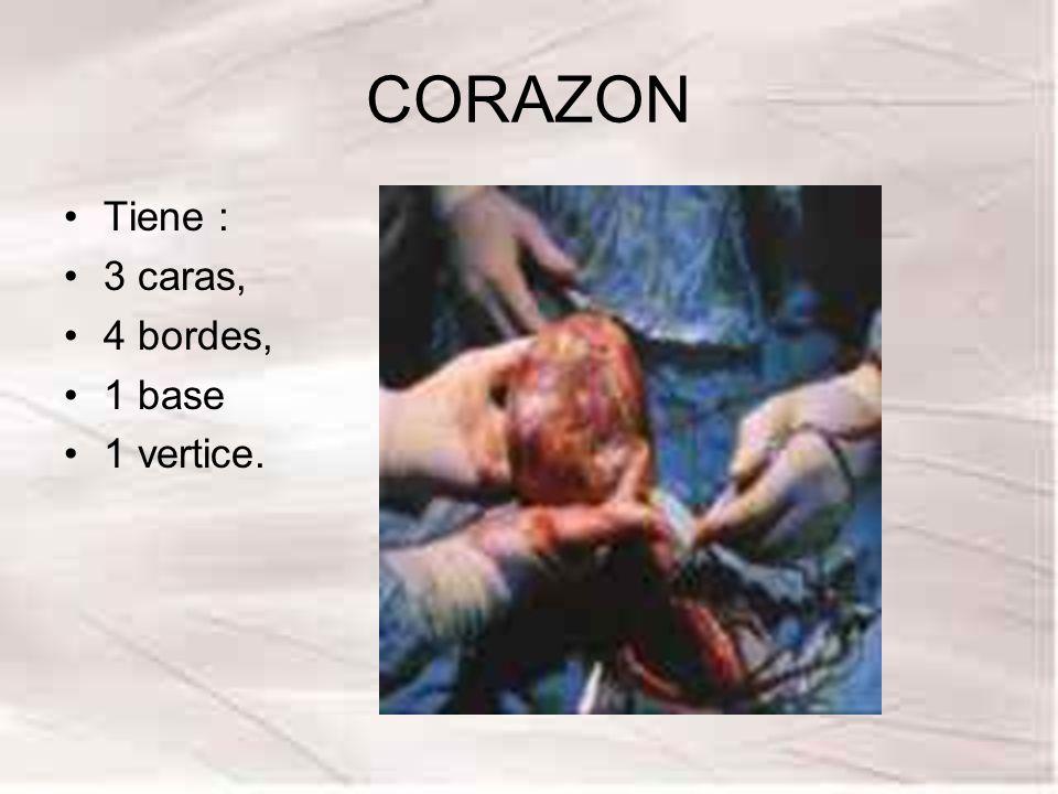 CORAZON Tiene : 3 caras, 4 bordes, 1 base 1 vertice.