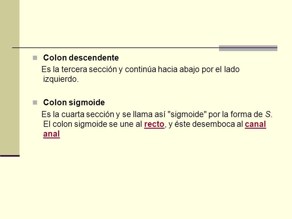 Colon descendente Es la tercera sección y continúa hacia abajo por el lado izquierdo. Colon sigmoide.
