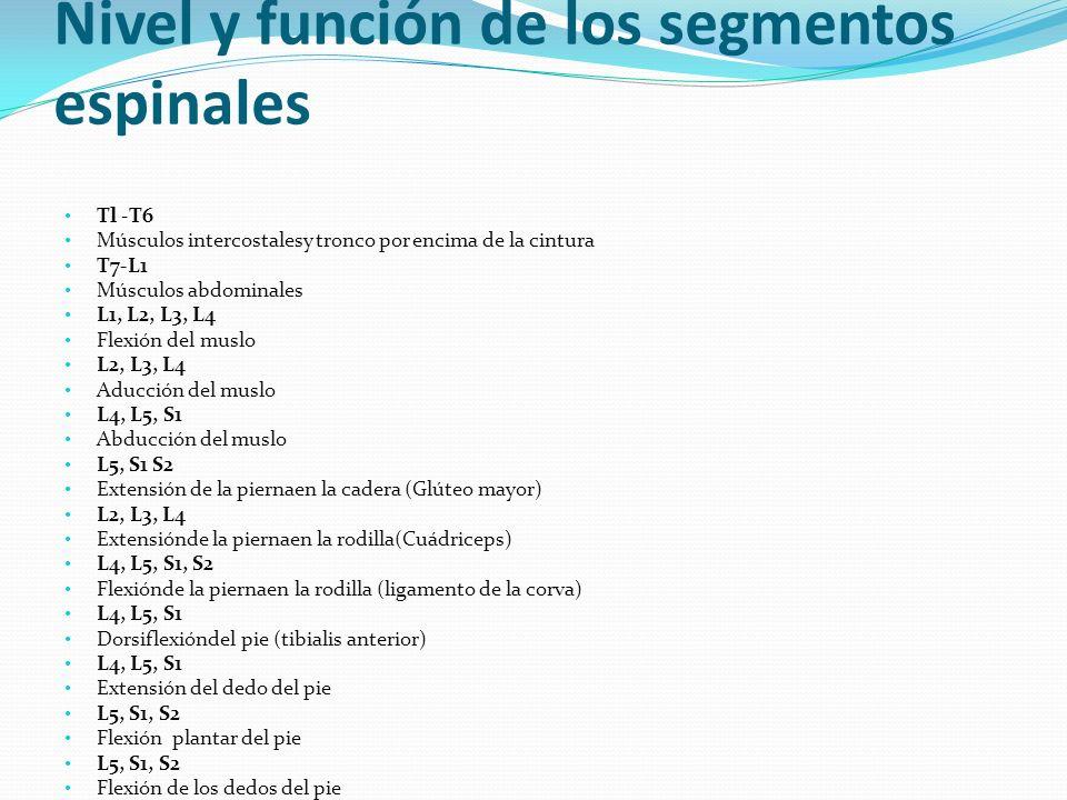 Nivel y función de los segmentos espinales